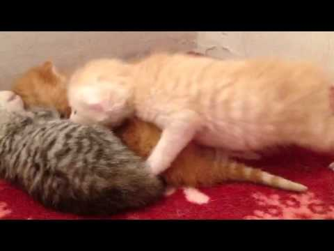 Daphne and newborn kittens meowing