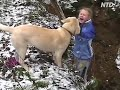 Dogs having fun in the snow, FUNNY!