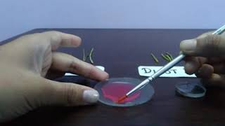 To make temporary slides of T.S of DICOT and MONOCOT stem 12th CBSE and ICSE.