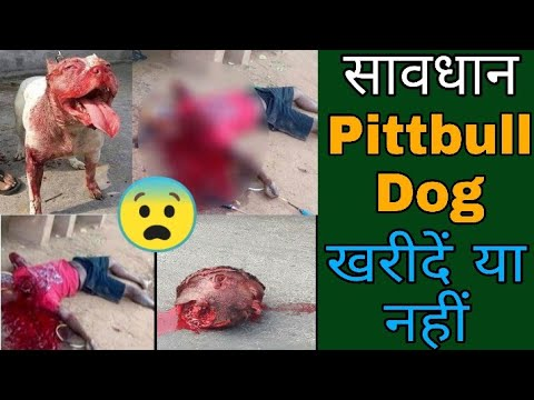 PITTBULL Dog Buy Or Not // Dog Price List In India // Wholesale Dogs Market