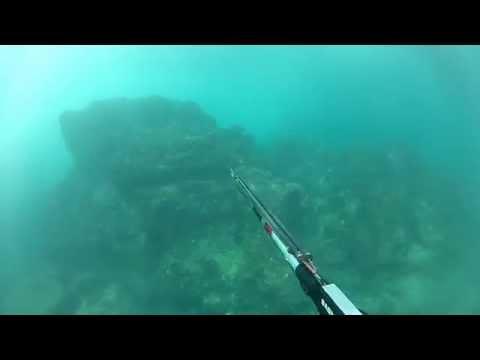 """MBP """"FUN DIVE"""" Spearfishing Hilo Hawaii"""