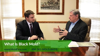 What Is Black Mold?   What You Should Know    Georgia Mold Lawyer   Toxic Mold Lawyers   Mold Firm