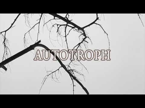 autotroph vs heterotroph yahoo dating