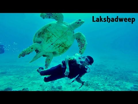 Lakshadweep - Scuba Diving with Turtle