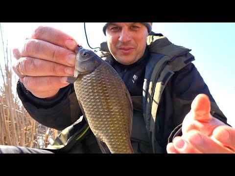 В этих камышах спряталась вся рыба с реки! Рыбалка на удочку с боковым кивком