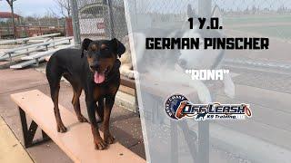 GERMAN PINSCHER / DOG TRAINING