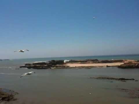 Seagulls in the wind in Essaouira