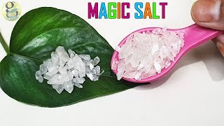 10 Miracles of Magic Salt in Gardening | Increase Flower Size