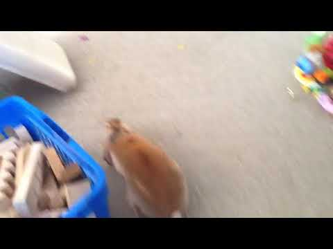 Rabbit exploring beyond the rabbit room (where she's not allowed)