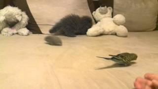 Попугай, хомяки и котенок.