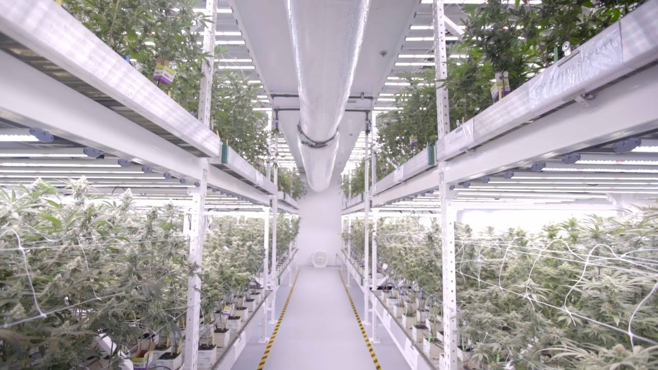 Vertical Led Grow Light Cannabis Farm At Medmen Youtube