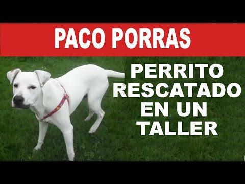 Paco Porras: Un perrito mestizo rescatado en un taller | Tu Mascota TV