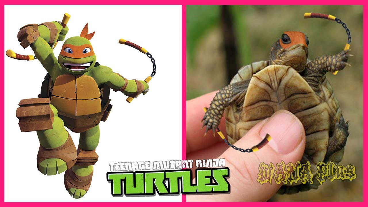 Download 🐢 Teenage Mutant Ninja Turtles In Real Life 💥 All Characters 👉@WANA Plus