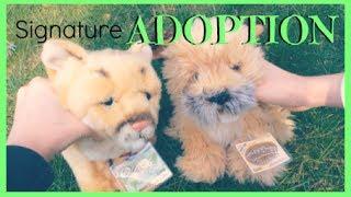 Adopting Webkinz Signature Border Terrier & Cougar