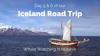Iceland Road Trip Day 5 & 6: Whale Watching in Husavik