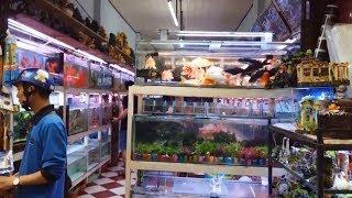 Con đường bán cá cảnh lâu đời nhất Sài Gòn Chợ Lớn - Chợ cá cảnh