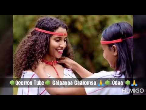 Download Galaanaa Garomsa New clip 2019 🌳Odaa🌳
