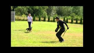 Psds Schutzhund & Ring Training