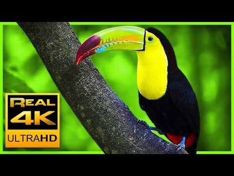Breathtaking Colors of Nature in 4K III 🐦Beautiful Nature -