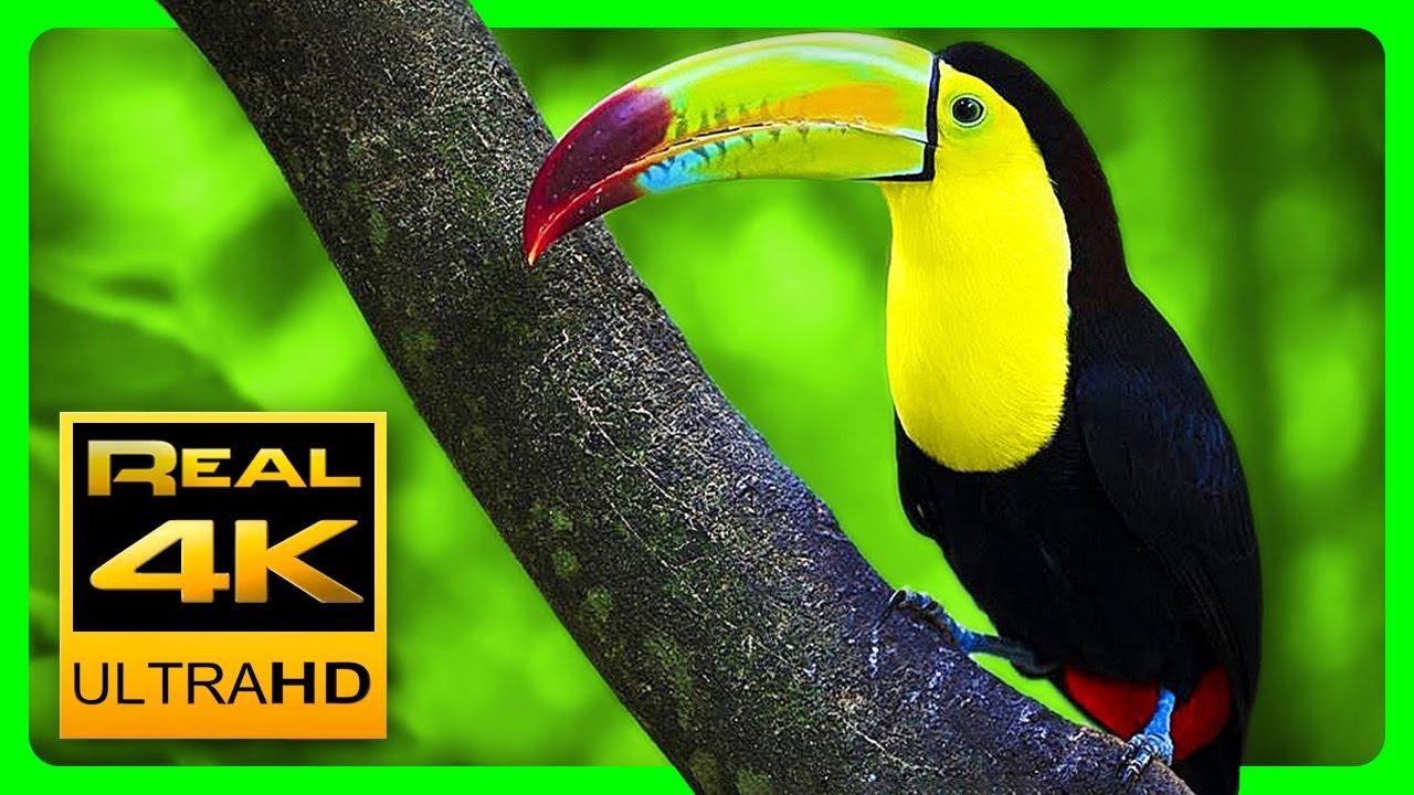 Breathtaking Colors of Nature in 4K III Beautiful Nature  Sleep Relax Music 4K UHD TV Screensaver
