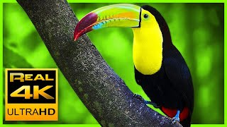 Breathtaking Colors of Nature in 4K III 🐦Beautiful Nature - Sleep R