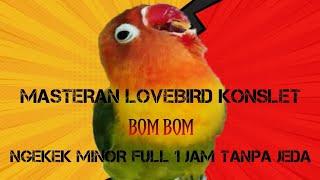 Download Lagu MASTERAN LOVEBIRD KONSLET BOMBOM FULL NGEKEK MINOR TANPA JEDA mp3