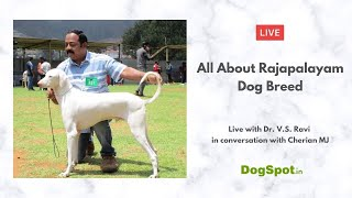 All About Rajapalayam Dog Breed: History, Characteristics, Health & Training