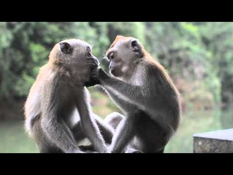 Two funny cute baby monkeys playing in nature #HD #Funny #Monkey