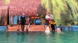 Дельфинарий на ул. Фучика. СПб(, 2014-05-04T19:23:14.000Z)