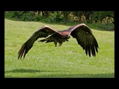 FASTEST BIRDS IN THE WORLD 2016
