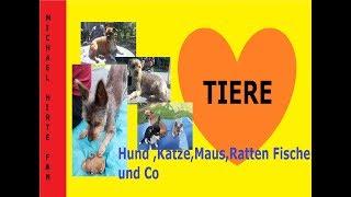 4 Hunde unterwegs an der Elbe