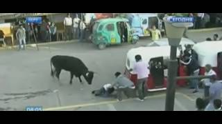 В Перу разъяренные быки поднимали зрителей на рога и топтали копытами: видео(На фестивале быков в Перу пострадали 9 человек., 2016-08-30T07:16:17.000Z)