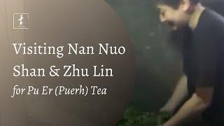 Nan Nuo Shans Zhu Lin Pu Er with Tea Drunk