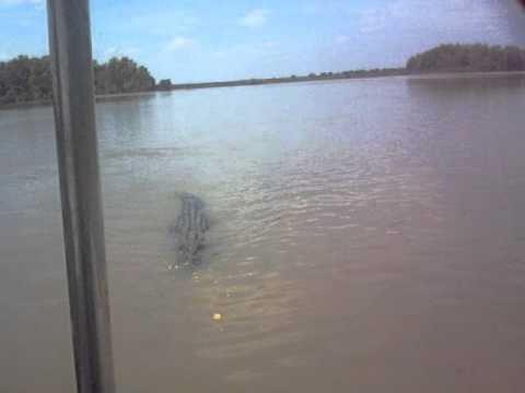crocodile attacks boat in Australia