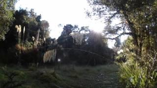 後半から静かな森林浴が始まります。 ストーキングの雰囲気を楽しみたい...