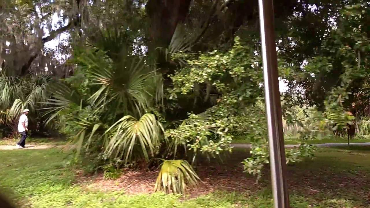 Train ride in City Park - New Orleans - YouTube