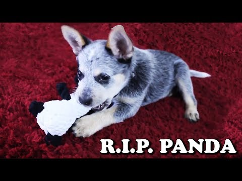 The Story of the Panda Toy