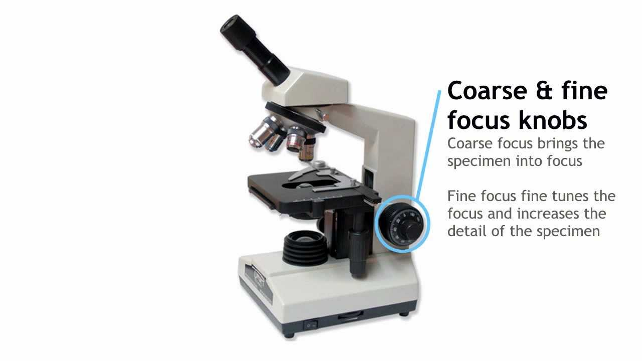 Parts of a Compound Light Microscope - YouTube