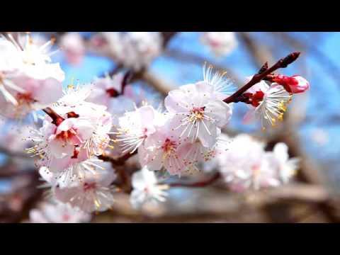 Китайская музыка ЦзиМианэнь от простуды, орви, гриппа. Расслабляющая нервную систему