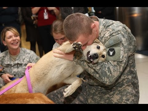 Dogs Welcoming Soldiers Home Compilation