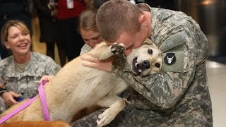 Dogs Welcoming Soldiers Home Compilation Video HD