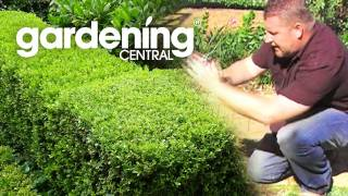 how to plant a hedge garden + hedging information