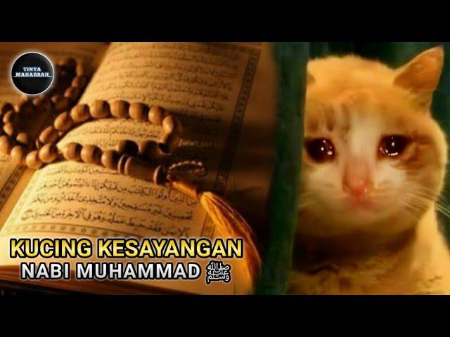 Kisah Nabi Muhammad Saw Keistimewaan Muezza Kucing Rasulullah Tinta Mahabbah Youtube