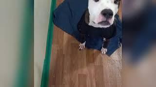 강아지 체온 측정