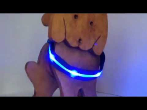 LED Doggy Collars