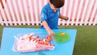 Fruit & Veg Week - Lavenders Class Explore Fruit and Vegetables