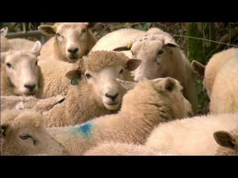 Adam's Farm.  Livestock management. BBC Countryfile