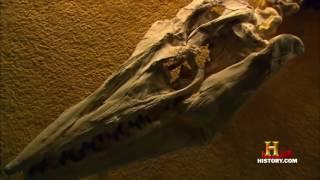 Тайны Доисторических Монстров. Доисторические животные   Animal Word