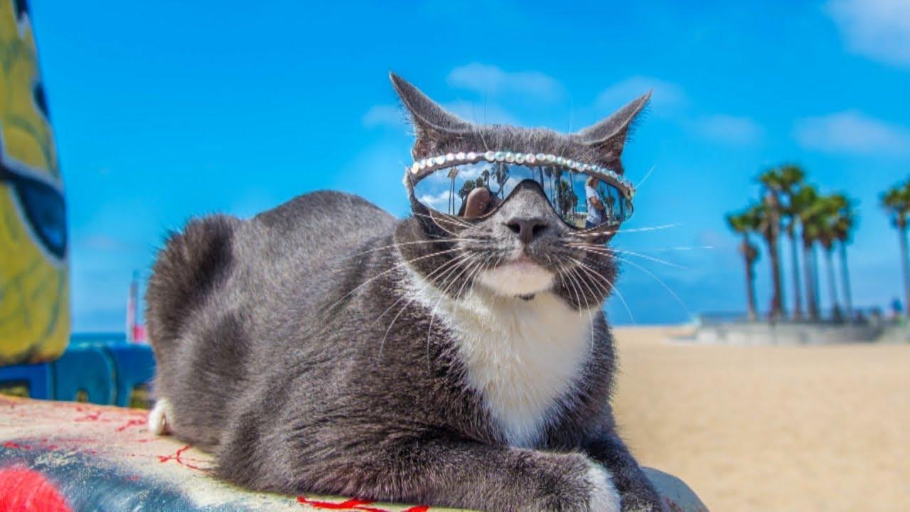 Крутые фотографии с котом