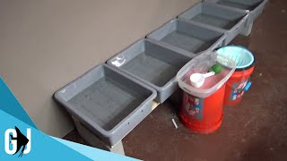 #518: Axolotl Fry Growout Rack - Update Monday